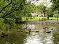 Bryngarw Country Park, Lake & ducks.jpg