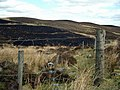Burnt heather at Edradynate - geograph.org.uk - 406198.jpg