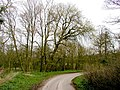 Burton Constable Woodland - geograph.org.uk - 383768.jpg