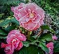 Butchart Gardens - Victoria, British Columbia, Canada (28464051923).jpg