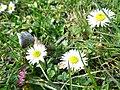 Byłem na Wilczych Ługach małymi krokami idzie wiosna 03 - panoramio.jpg