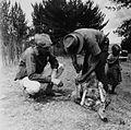 COLLECTIE TROPENMUSEUM Het bekappen van een schapenhoef bij Nyahururu TMnr 20014513.jpg