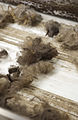 CSIRO ScienceImage 2368 Wool Scouring.jpg