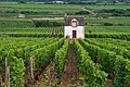 Cabotte and Vineyard, Volnay, France.jpg