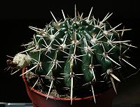 Cacti1012.jpg