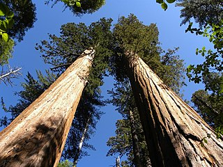 Calaveras Big Trees State Park California state park with groves of giant sequoias