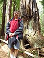 California redwood trees standing in front of a giant tree.JPG