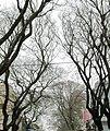 Calle Gaboto - panoramio.jpg