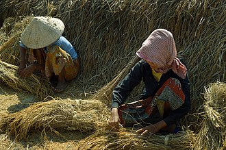 Political economy in anthropology - Cambodian rice farming