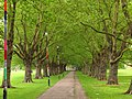 Cambridge 2013-06 (12663131464).jpg