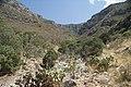 Camino del Cuatro, Sierra Zapalinamé, Saltillo Coahuila - panoramio (33).jpg