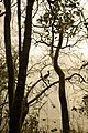 Caneel Bay Sunset by Turtle Point Trail 2.jpg
