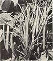 Capitol city seeds - 1962 (1962) (20540371191).jpg
