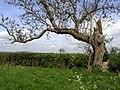 Carr Lane View - geograph.org.uk - 170633.jpg