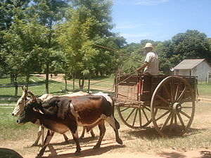 San Pedro Department, Paraguay - A cart in Veinticinco de Diciembre San Pedro department