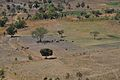 Cattle near Dedza (15060910862).jpg