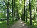 Celle Französischer Garten Lindenallee 01.JPG