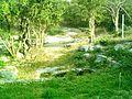 Cenote Chen Ha (12).JPG