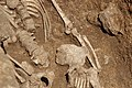 Chantier de fouilles à Morigny-Champigny en juin 2012 75.jpg