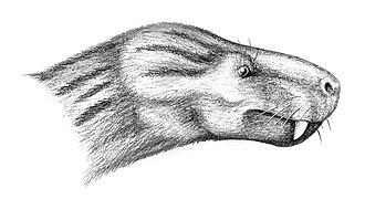 Tropidostoma Assemblage Zone - Charassognathus