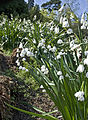 Chartwell (6246250770).jpg