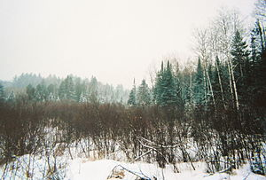 Chequamegon-Nicolet National Forest - A wintry scene in Chequamegon-Nicolet National Forest.
