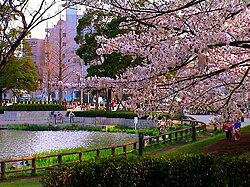Vista del Hanami en Tokio.