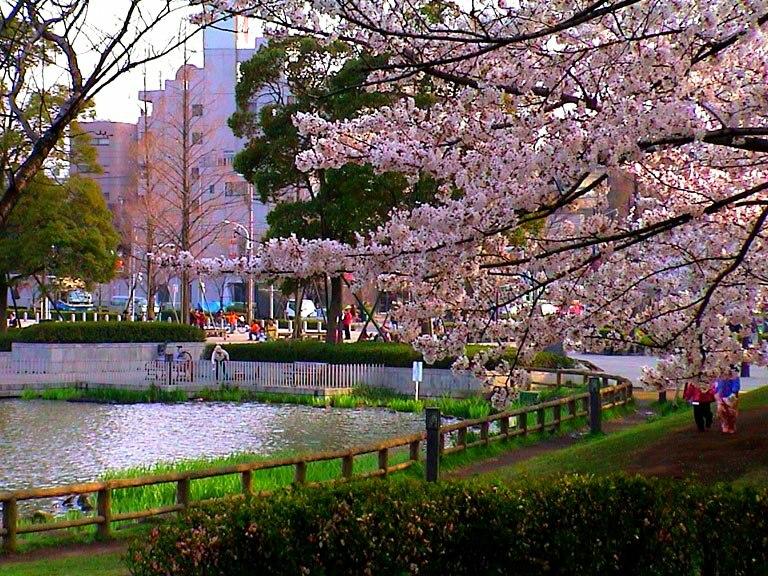 CherryBlossomsUkimaPark