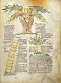 Cherubim, Tree of penitence & ladder of twelve virtues Wellcome L0029360.jpg