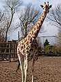 Chester Zoo (9334907193).jpg