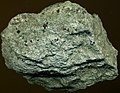 Chlorite schist (Wissahickon Schist, Neoproterozoic to Cambrian; Jarrettsville, Maryland, USA) (16735383710).jpg