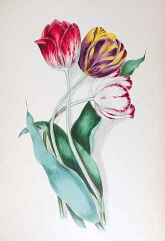 Clarissa Munger Badger - Clarissa Munger Badger, lithograph of tulips from her 1867 book Floral Belles from the Green-House and Garden.