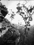 Cliff walls, Hydro Majestic, Medlow Baths (2363523136).jpg
