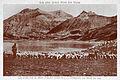 Col et lac d'Allos moutons.jpg
