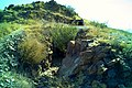 Coll dels Belitres 2015 08 02 05 M8.jpg