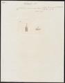 Coluber coccineus - kop - 1837 - Print - Iconographia Zoologica - Special Collections University of Amsterdam - UBA01 IZ12000257.tif