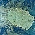 Columbia Glacier, Calving Terminus, Terentiev Lake, October 11, 1991 (GLACIERS 1559).jpg