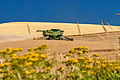 Combine Harvesting Wheat - Eastern Washington wheat harvest.jpg