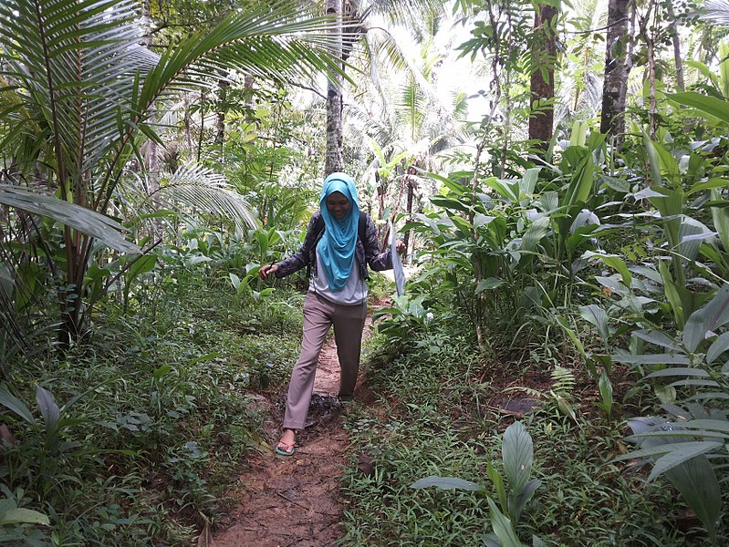 File:Conducting a Malaria Outbreak Investigation - Indonesia (16868505320).jpg