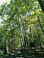 Conemaugh Gap Early Fall 2016 - panoramio - Ron Shawley (19).jpg