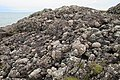 Conglomerate at Corsewall Point in Dumfries and Galloway in Scotland - geograph 5546542.jpg