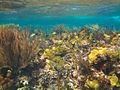 Coral Reefscape (5295155753).jpg