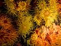 Coral Sol.jpg