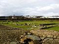 Corbridge Roman Ruins1.jpg