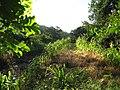 Cornfield, looking east, June 2010 - panoramio.jpg