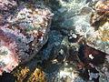 Costa Cabo de Gata 64.JPG