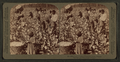Cotton is king - A plantation scene, Georgia, by Underwood & Underwood.png