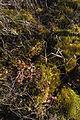 Cranesville Swamp Preserve 80.JPG