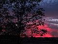 Crepúsculo vespertino en rosados (8081417487).jpg