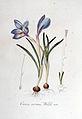Crocus vernus — Flora Batava — Volume v6.jpg